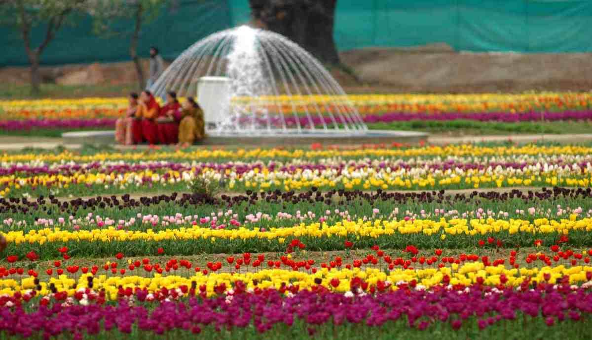 tulip-garden