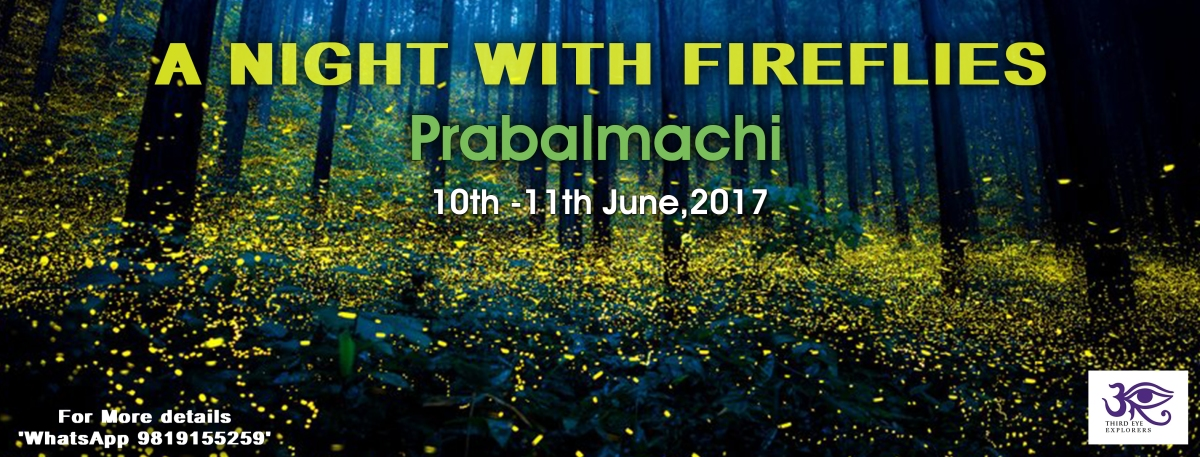 Fireflies at Prabalmachi