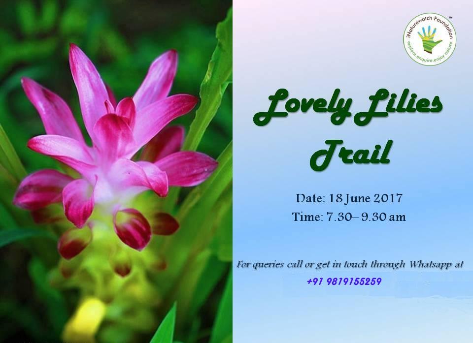 Lilies trail