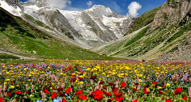 flower valley with snow capped hills