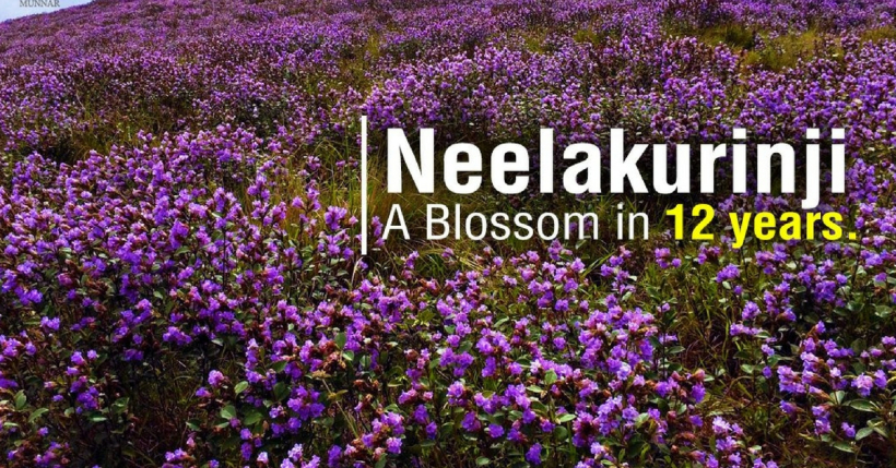 neelakurinji in 12 years